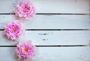 peonies, flowers, background